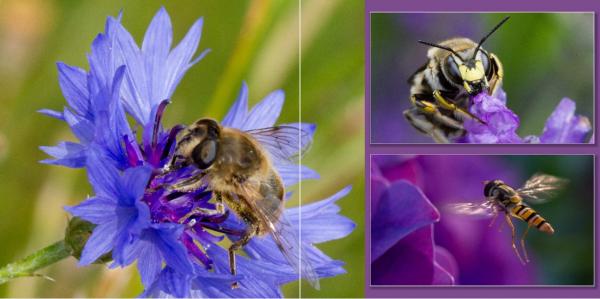 Schermafbeelding-2014-06-10-om-13.49.45